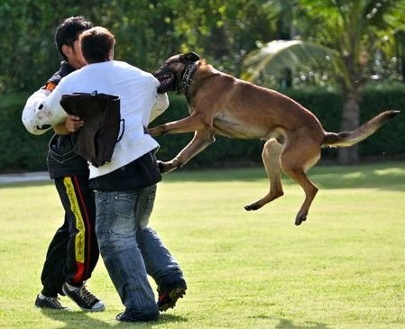 Dog Attacks by Breed
