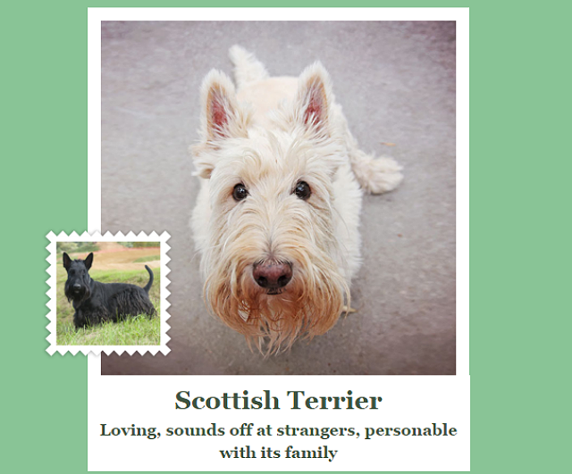 Dog Breed Identifier