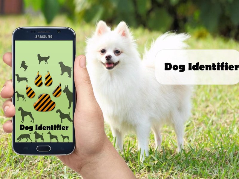 Identify Dog Breed By Characteristics
