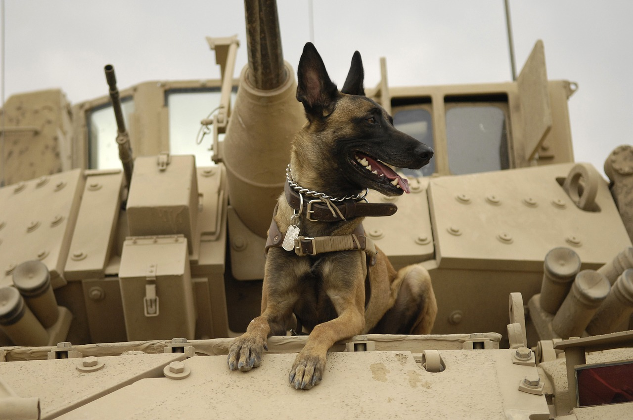 Military Working Dog Breeds