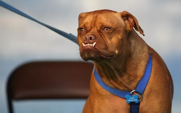 Ugliest Dog Breed