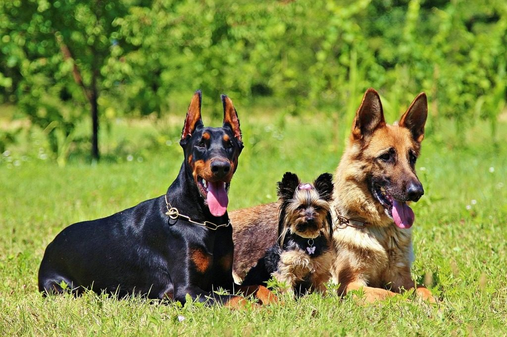 Best Large Dog Breeds For Families