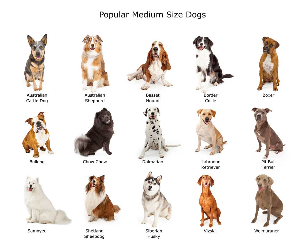 Dog Breed Finder
