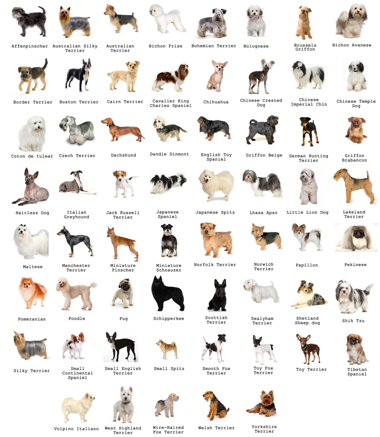 All Small Dog Breeds Az With Pictures