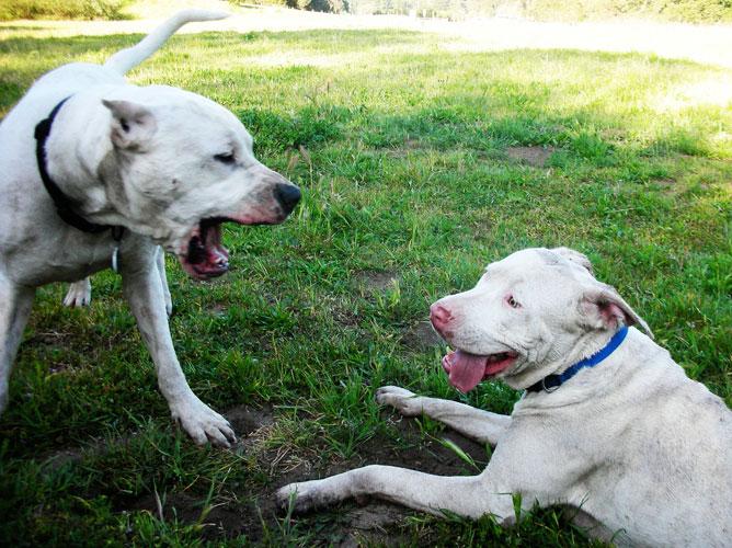 Extinct Dog Breeds Pictures