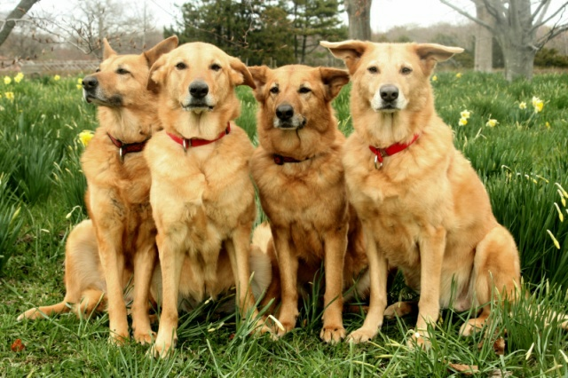 What Is The Rarest Type Of Dog Breed