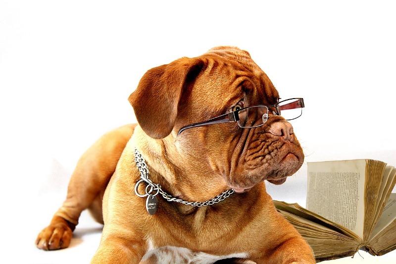 Beethoven Dog Breed Name