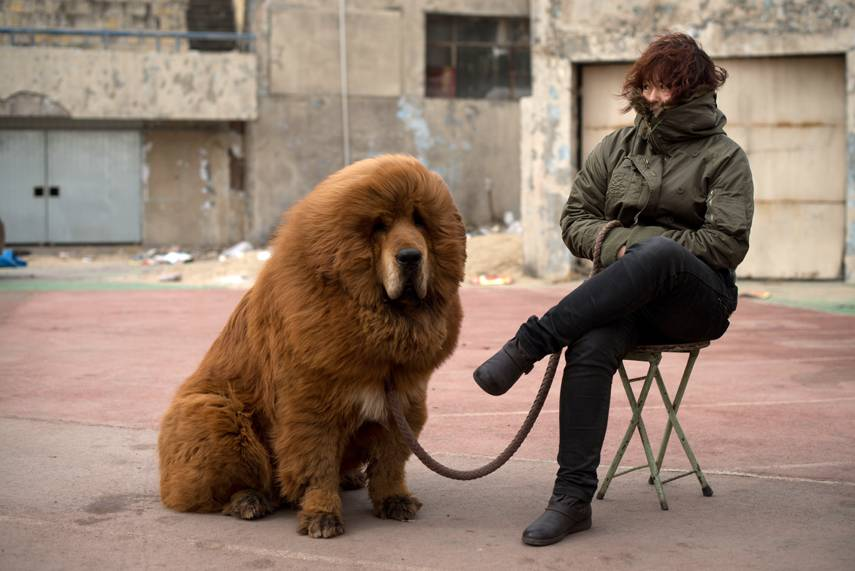 Dogs in biggest world the The Top