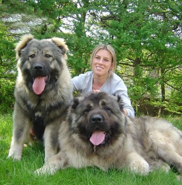Extra Large Dog Breed Names