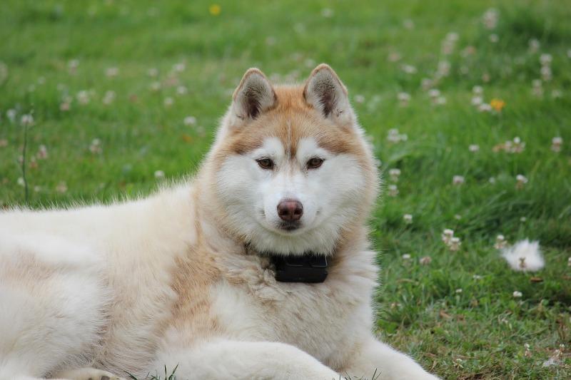 Doge Dog Breed