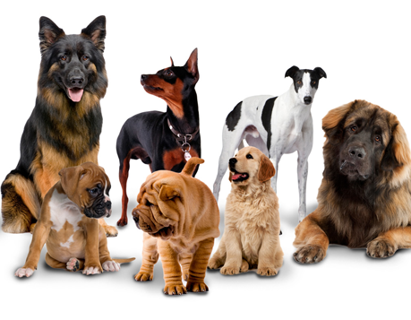 How Many Breeds of Dogs Are There