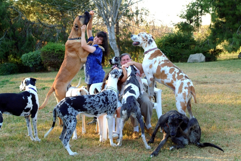 Largest Breed of Dog