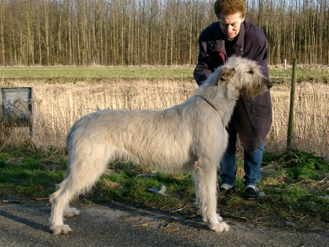 The Favorite Largest Dog Breed In The World 2018