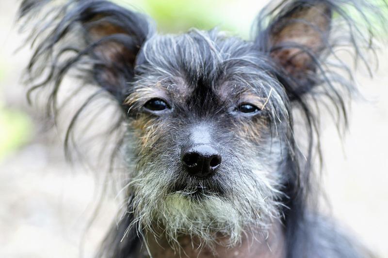 Ugly Dog Breeds