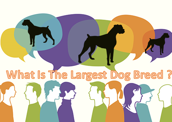What Is The Largest Dog Breed