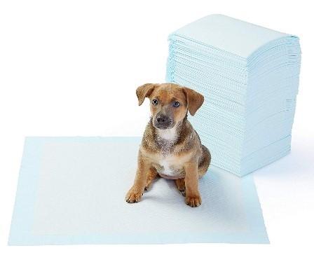 puppy starter list