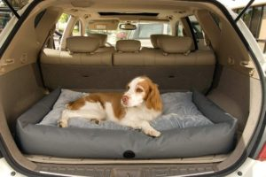 best dog travel bed