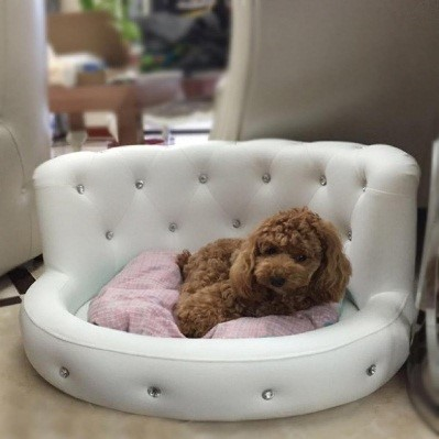 best small dog beds 2020