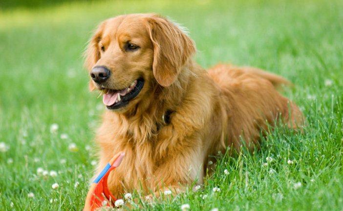 most popular dog breeds 2019