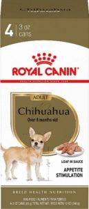 what to feed old chihuahua