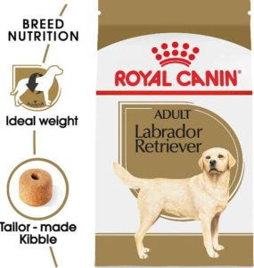 best dog food for labs 2020