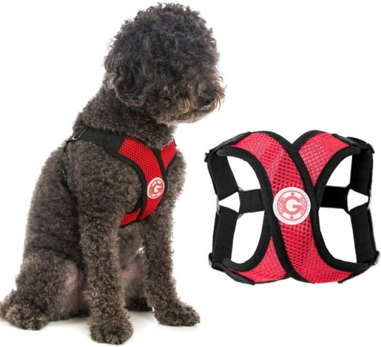 Gooby Dog Harness Comfort X Step in Small Dog Harness with Patented Choke Free X Frame Perfect on The Go No Pull Harness for Small Dogs or Cat Harness